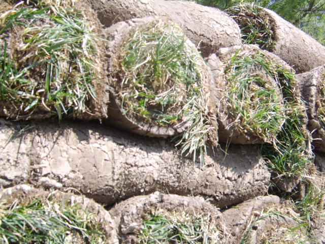 Franklin Tn Sod sod in rolls